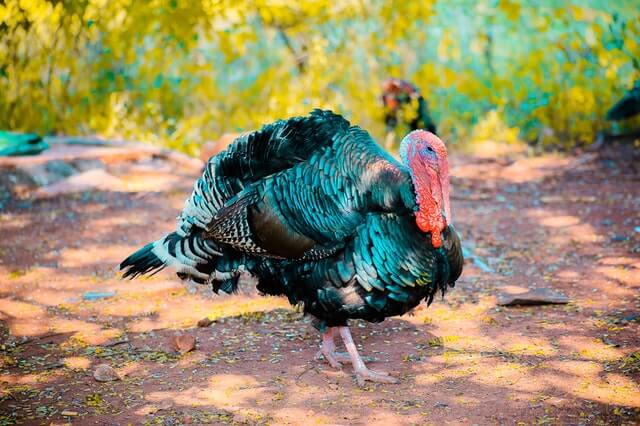 go cold turkey - Call Center Idioms